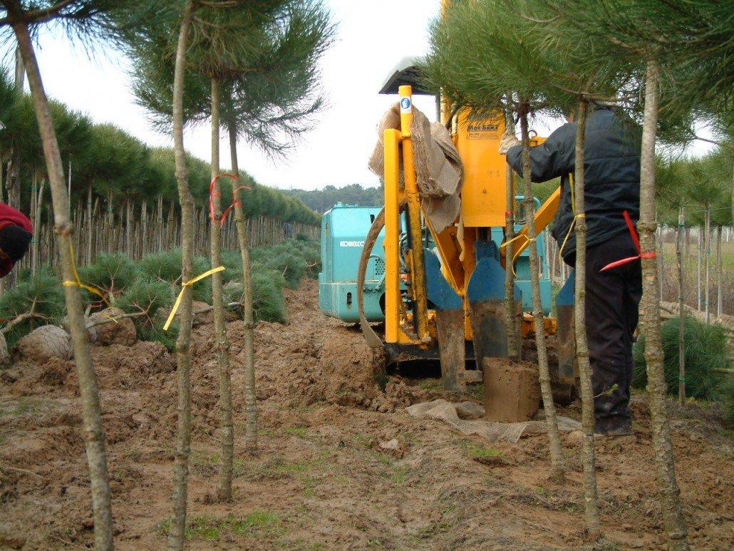 zollatrice escavatore girosagoma kobelco