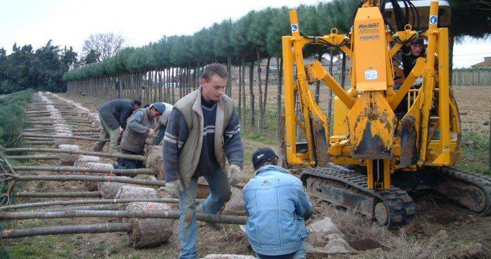zollatrice escavatore pinus pinea